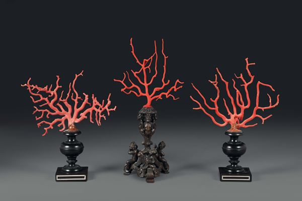 A triptych with corals mounted onto ebanised bases.